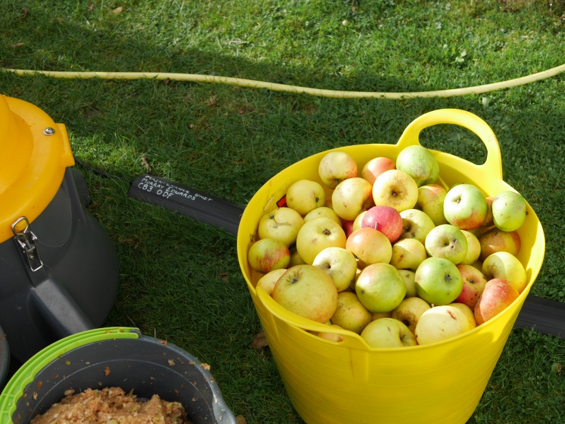 Hidden Gems: Apple Day